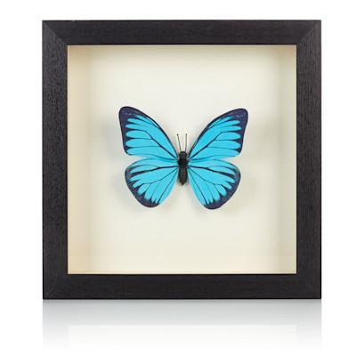 IMPRESSIONEN living Bilderrahmen Schmetterling, Holz, Papier