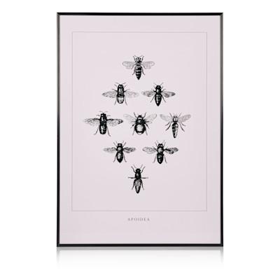 Bild Fliegen, gerahmt, Papier, Glas