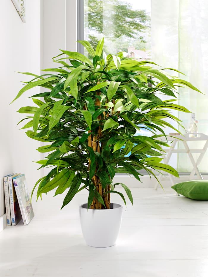 Ficus Globen Lighting