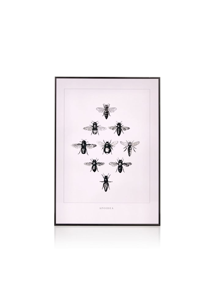 Echt klasse: Bild Fliegen, Impressionen rosa/schwarz Hit