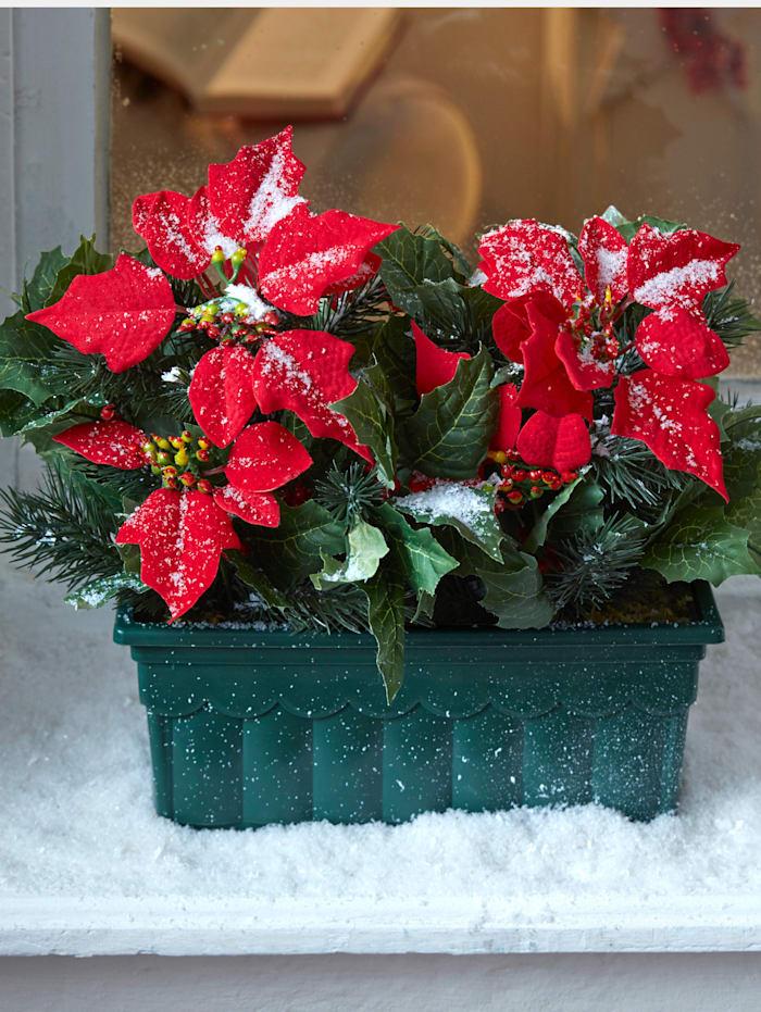 Weihnachtsstern im Blumenkasten IGEA rot