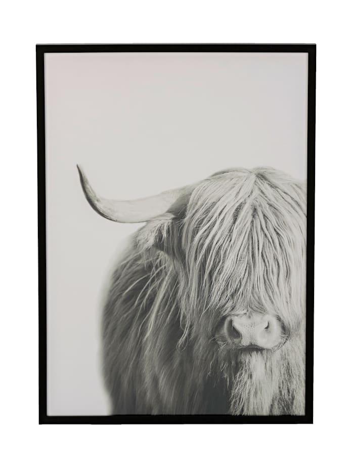 Kauf-Tipp: Bild, Highland Rind, Impressionen living Idee