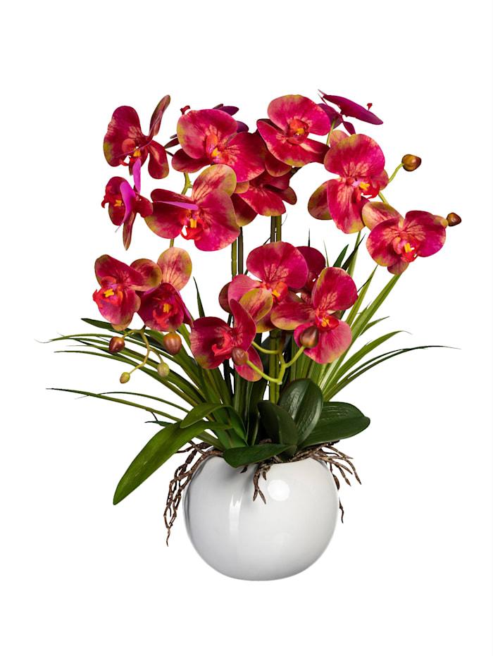 Orchidee in Rundvase Globen Lighting Pink