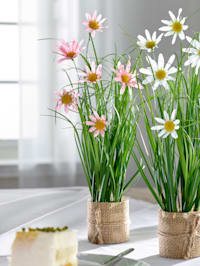 Konstgjord växt, margeriter