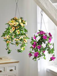 Konstgjord växt, hängpetunia