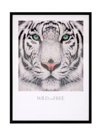 Tableau, tigre