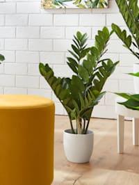 Konstgjord växt – Zamia stor