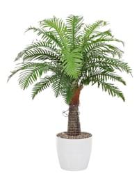 Pokojová palma