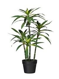 Konstgjord växt, dracena