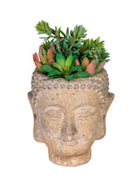 Sukkulenten in Buddhaübertopf