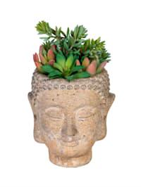 Vetplantjes in boeddhapot