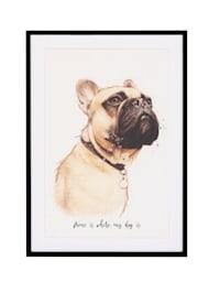 Bild, Bulldogge