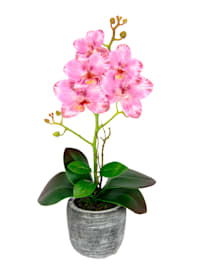 Orkidé i kruka