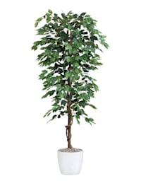 Konstgjord växt, benjaminfikus