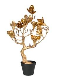Arbre magnolia