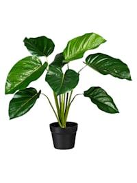 Konstgjord växt, filodendron