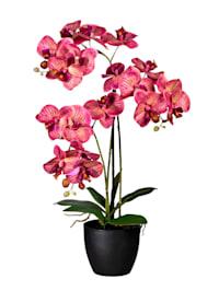 Orchidee in schwarzem Topf