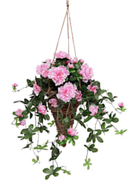 Azalea in hanging basket