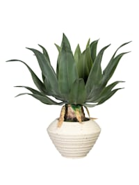Agave in Keramikschale