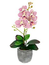 Orchidée artificielle dans pot, fuchsia