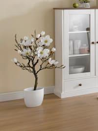 Magnolia inpot