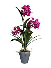 Dendrobie in Vase