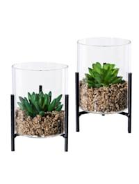 Glazen pot met succulenten, 2 stuks