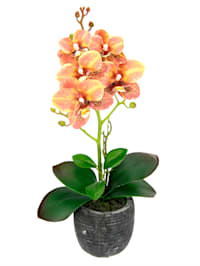 Orchidee im Topf, orange