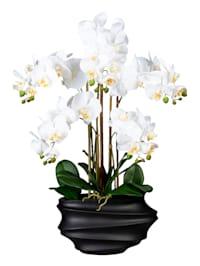 Orchidee in schwarzer Vase