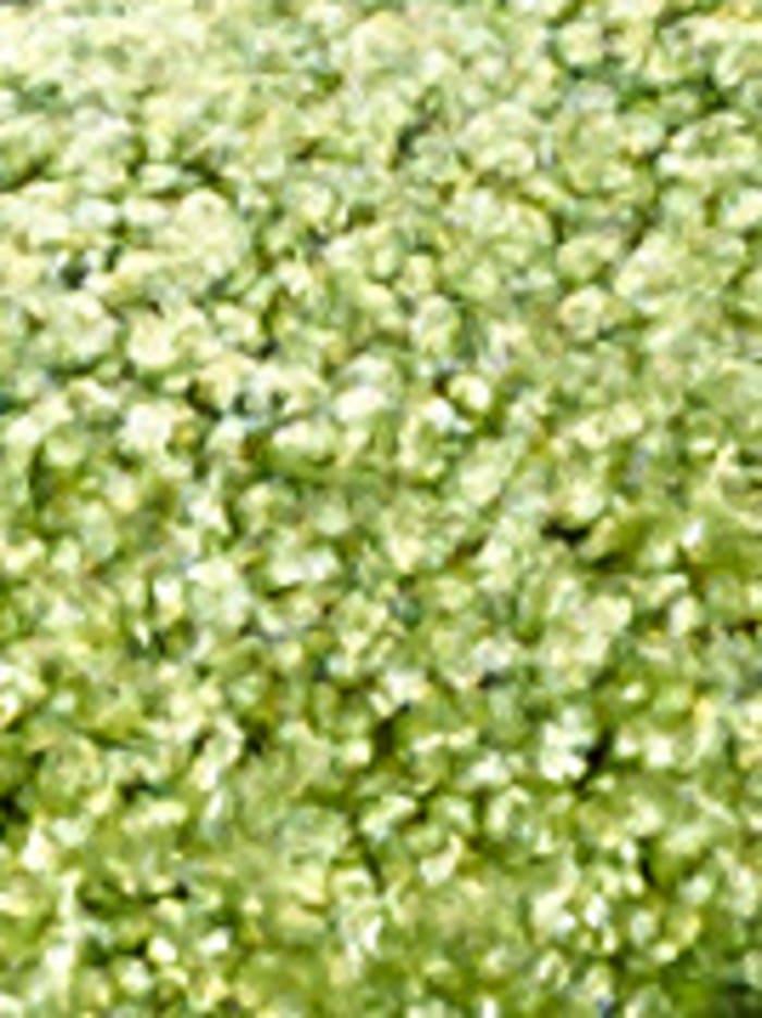 Webschatz Schmutzfangmatte Nino, Grün