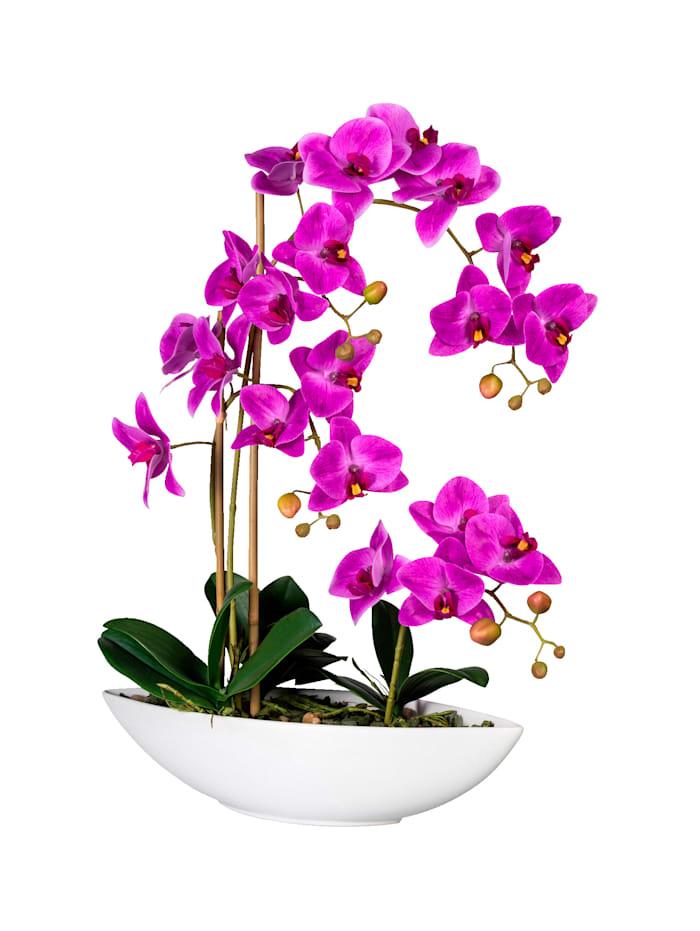 Globen Lighting Orchidee in Schiffchenvase, Fuchsia