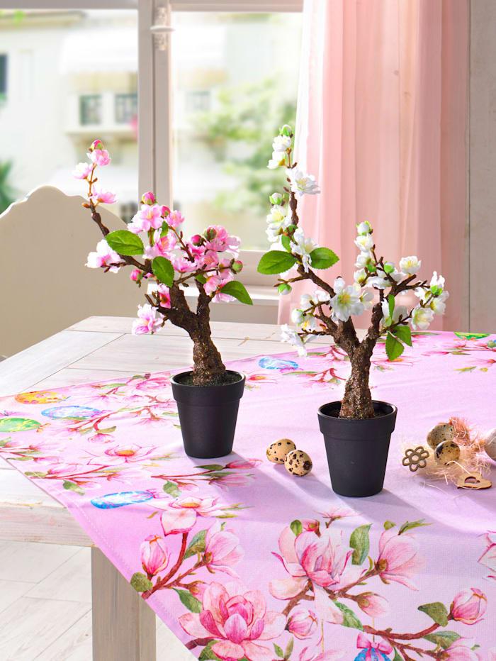 Gasper Kiresbær bonsaitre, Hvit