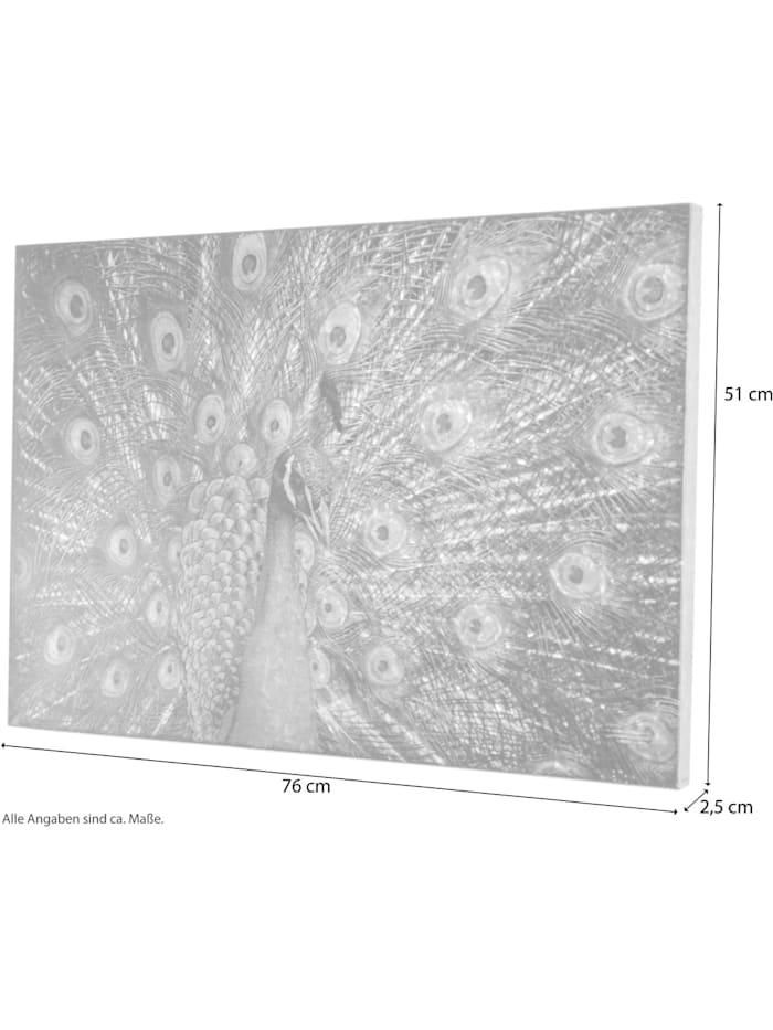 Möbel-Direkt-Online Wanddekoration Pfau, bunt