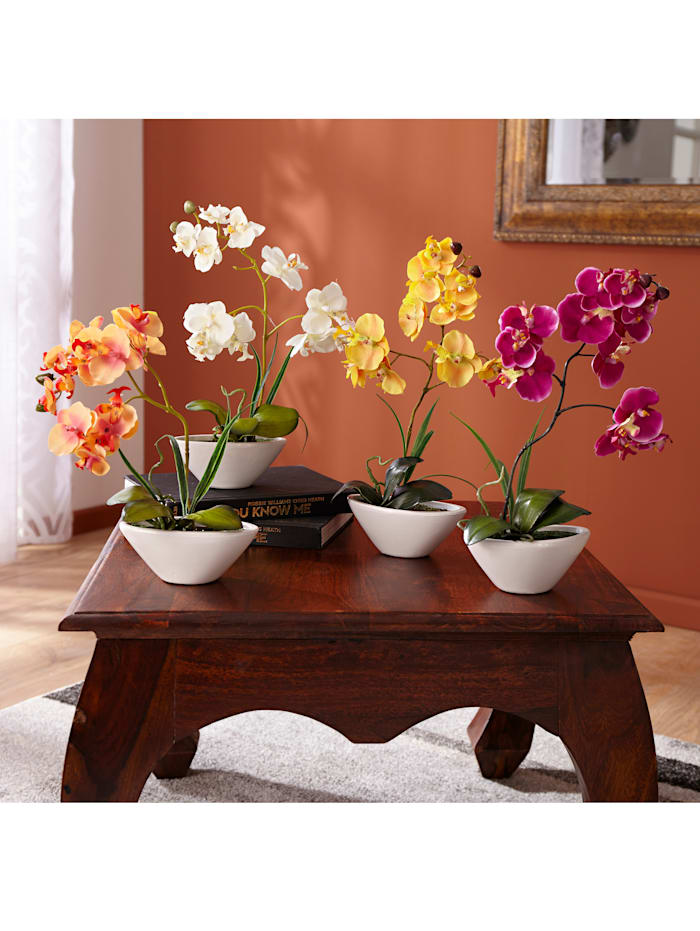 Phalaenopsis - prydnadsorkidé, Gul