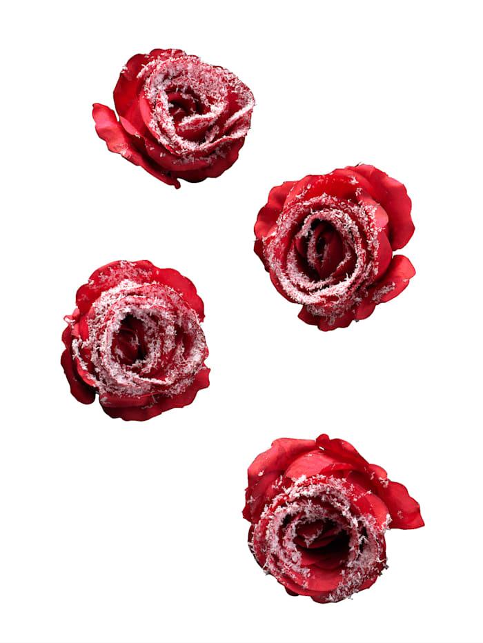 Koristeruusu, 4/pakkaus, punainen