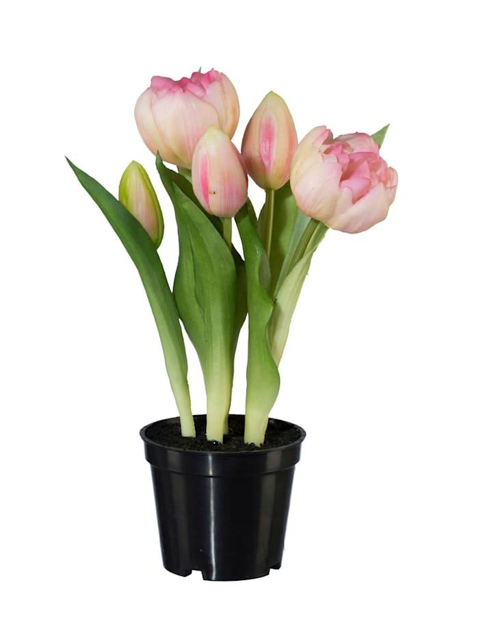 Globen Lighting 2er Set Tulpen, Rose