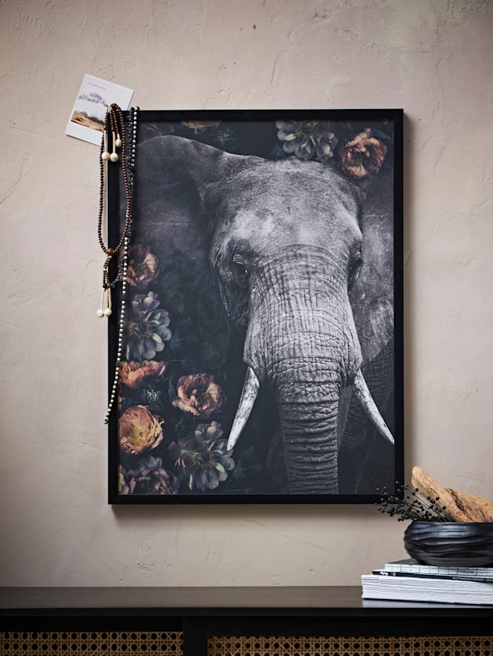 Bild, Elefant