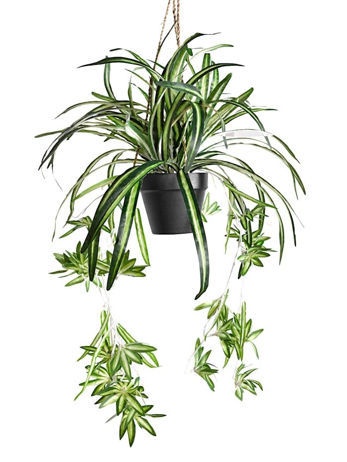 Konstgjord växt, ampellilja, Grön