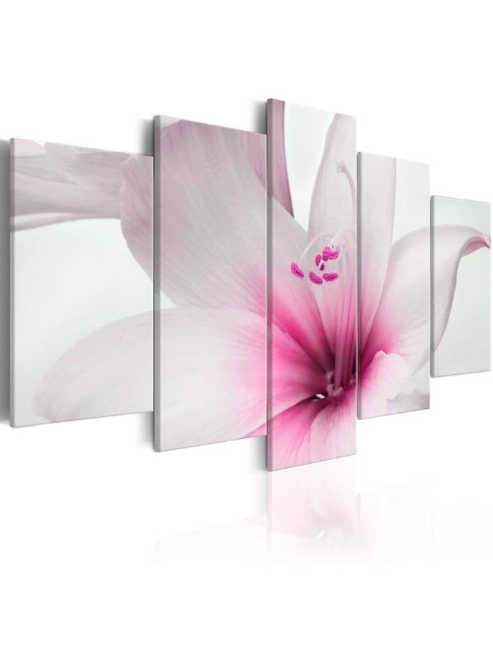 artgeist Wandbild Amarylis: Pink Charm, rosa,Weiß