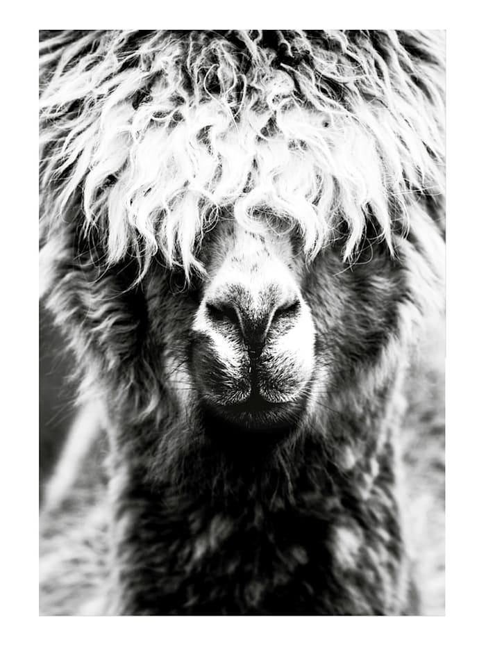 mySPOTTI Bild, Lama, weiß/schwarz/grau