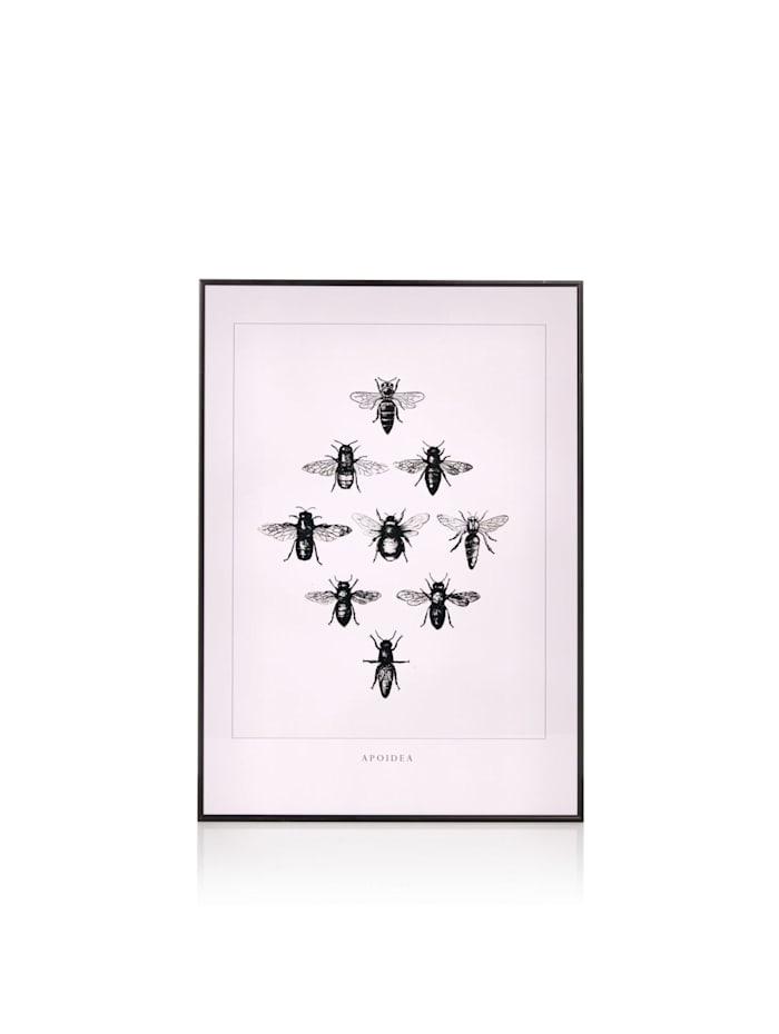 IMPRESSIONEN Bild Fliegen, rosa/schwarz