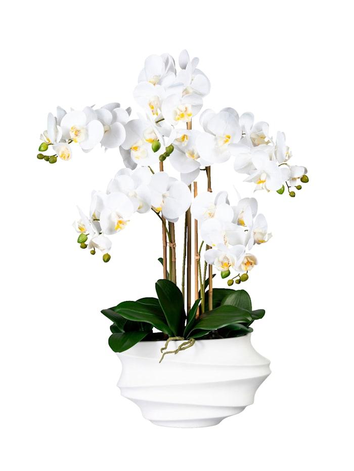 Globen Lighting Orchidée dans vase, Blanc