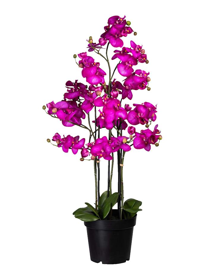 Globen Lighting Orchidee mit Knospen, Lila