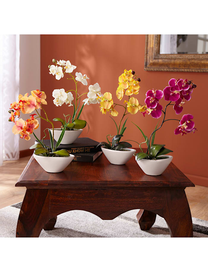 Phalaenopsis - prydnadsorkidé, Orange