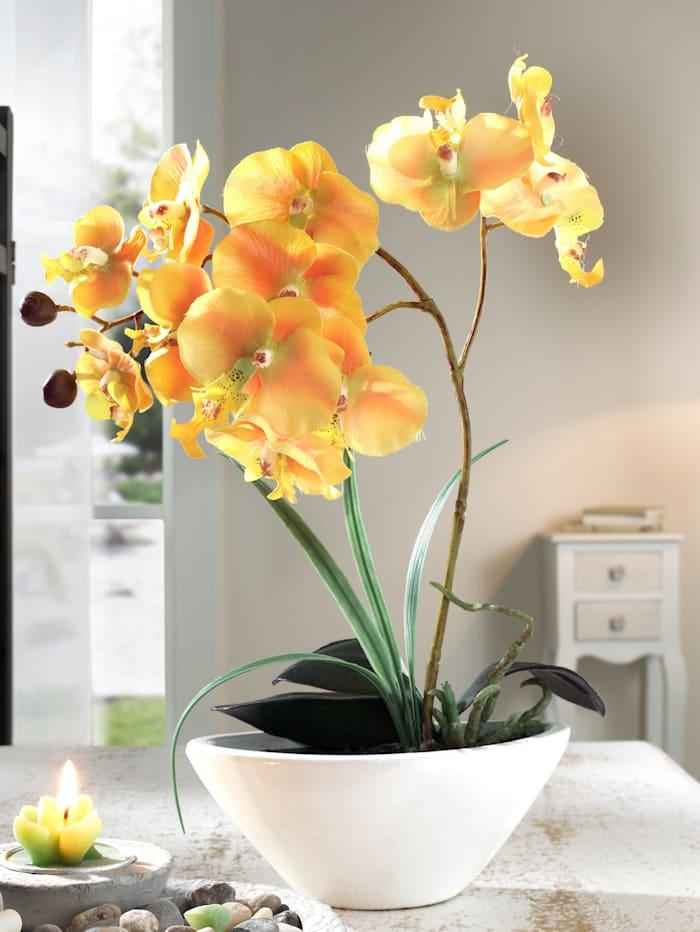 KLiNGEL Phalaenopsis, Geel