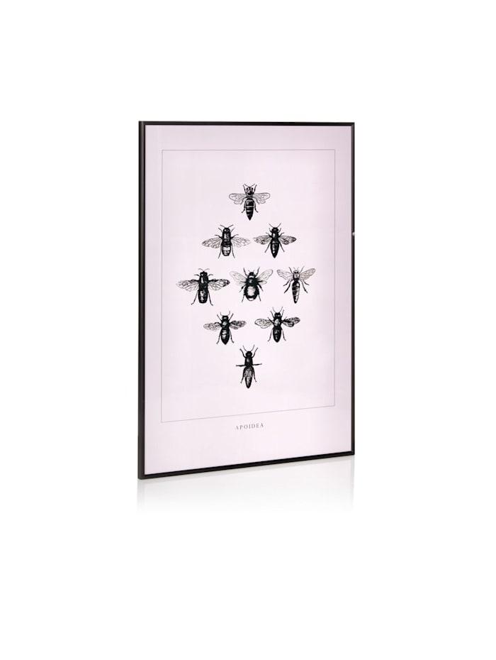 Bild Fliegen