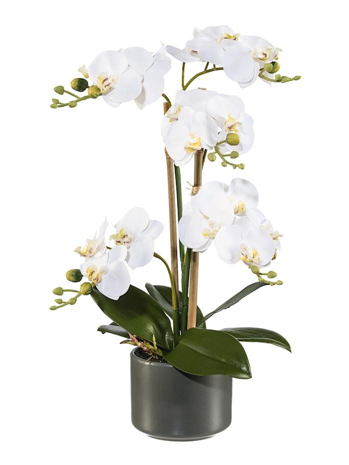 Globen Lighting Orchidee im Keramiktopf, Weiß
