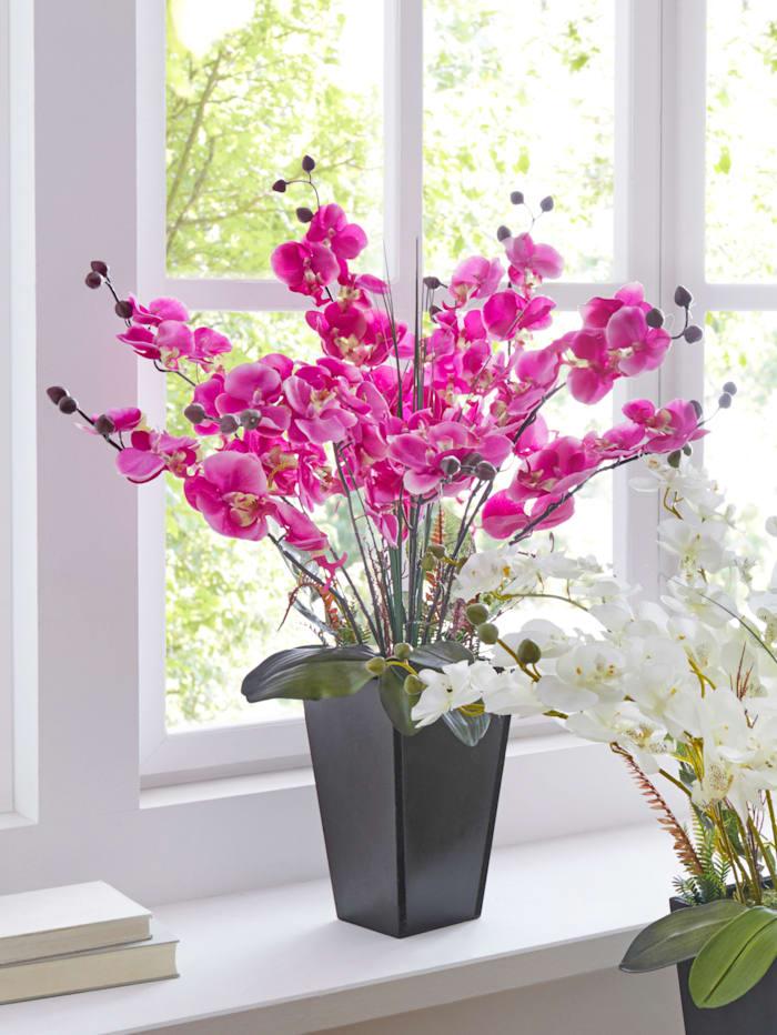 IGEA Orchidee Im Topf, Fuchsia