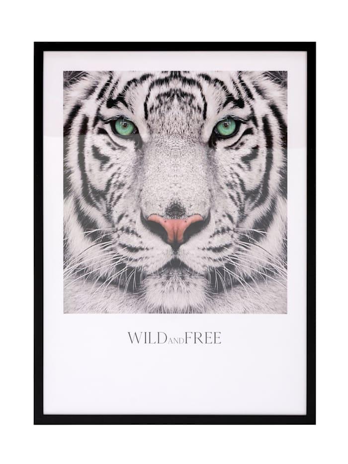 IMPRESSIONEN living Bild, Tiger, grau,weiß,mint