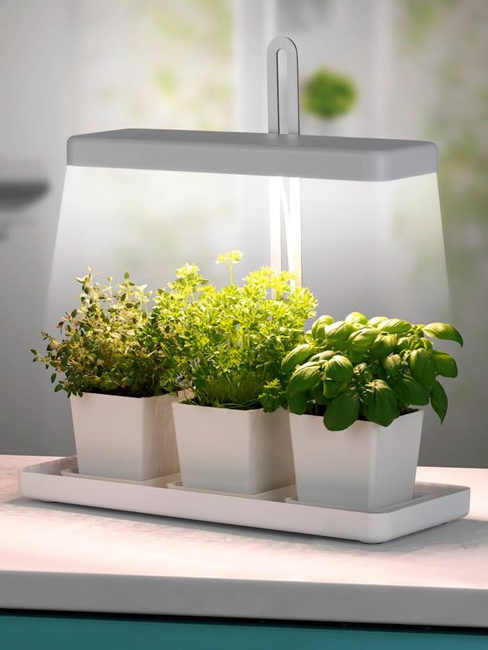 Lampe pour plantes à LED